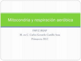 Mitocondria y respiración aeróbica