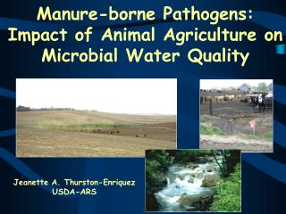 Manure-borne Pathogens: Impact of Animal Agriculture on Microbial Water Quality