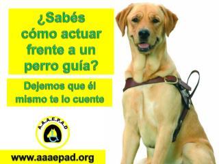 ¿ Sabés cómo actuar frente a un  perro  guía?