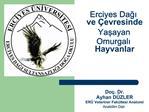 Erciyes Dagi  ve  evresinde Yasayan Omurgali Hayvanlar      Do . Dr. Ayhan D ZLER ER  Veteriner Fak ltesi Anatomi Anabil