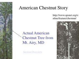 American Chestnut Story
