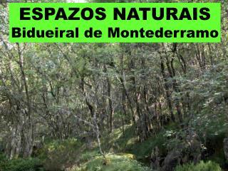 ESPAZOS NATURAIS Bidueiral de Montederramo