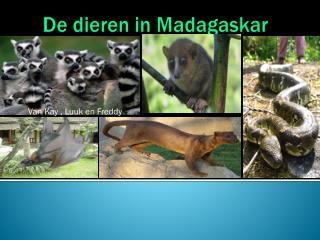 De dieren in Madagaskar