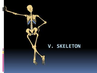 V. Skeleton