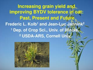 Increasing grain yield and improving BYDV tolerance in oat:  Past, Present and Future
