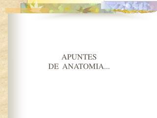 APUNTES DE ANATOMIA...