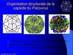 Organisation structurale de la capside du Poliovirus