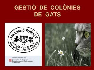 GESTIÓ  DE  COLÒNIES DE  GATS