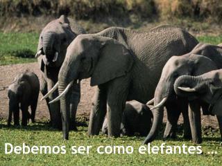 Debemos ser como elefantes …