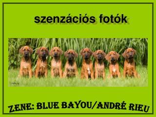 ZENE: Blue Bayou/André Rieu