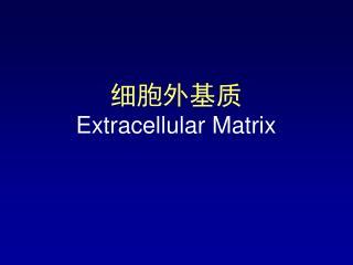 细胞外基质 E xtracellular Matrix