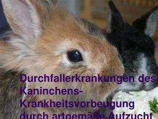 Durchfallerkrankungen des Kaninchens- Krankheitsvorbeugung  durch artgemäße Aufzucht