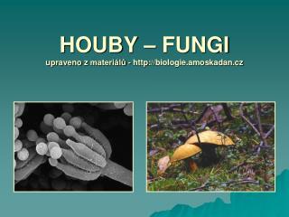 HOUBY – FUNGI upraveno  z  materiálů - http ://biologie.amoskadan.cz