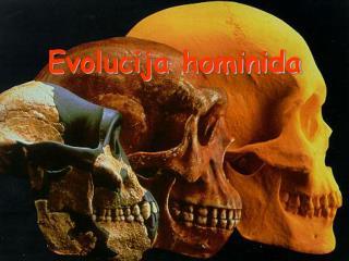 Evolucija hominida