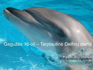 Gegu žės 16-oji – Tarptautinė Delfinų diena