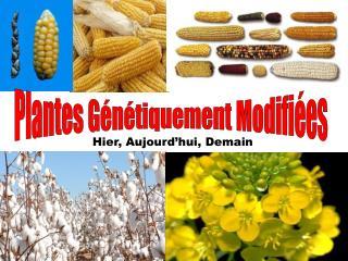 Plantes Génétiquement Modifiées