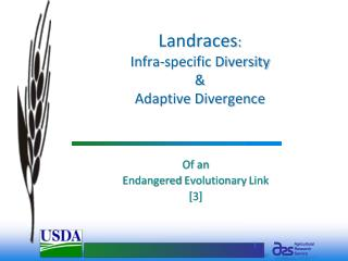 Landraces:  Infra-specific Diversity    Adaptive Divergence