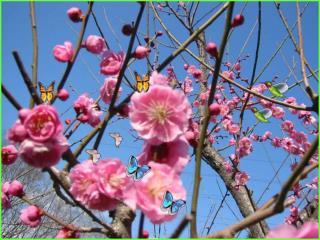 Mừng đón Chúa Xuân về khắp nơi! Ngàn tiếng ca vang bốn phương trời.