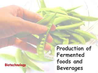 Production of Fermented foods and Beverages