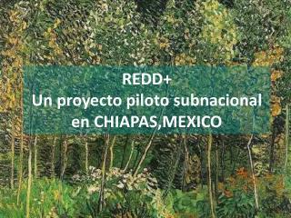 REDD+  Un proyecto piloto subnacional en CHIAPAS,MEXICO