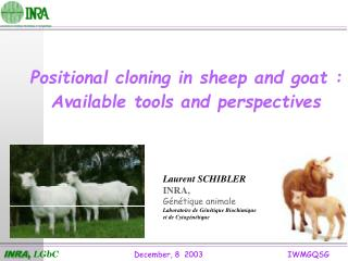 Positional cloning in sheep and goat : Available tools and perspectives