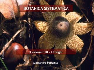 Lezione 5 III   I Funghi