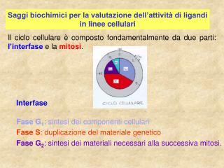 Saggi biochimici per la valutazione dell'attività di ligandi in linee cellulari