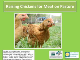 Raising Chickens for Meat on Pasture