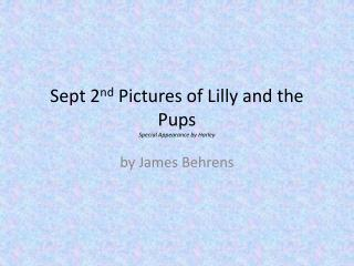 Sept 2 nd  Pictures of Lilly and the Pups Special Appearance by Harley