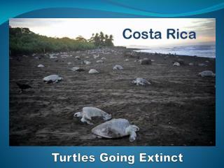 Turtles Going Extinct