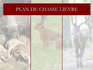 PLAN DE CHASSE LIEVRE
