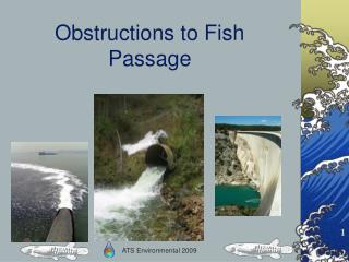 Obstructions to Fish Passage