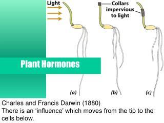 Charles and Francis Darwin (1880)