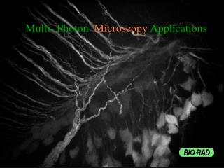 Multi- Photon   Microscopy  Applications