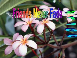 Friends Never Fade