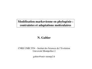 Modélisation markovienne en phylogénie : contraintes et adaptations moléculaires