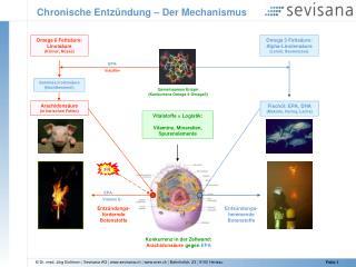 Chronische Entzündung – Der Mechanismus