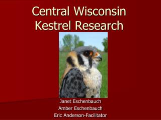 Central Wisconsin Kestrel Research