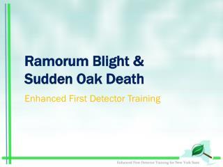 Ramorum Blight &  Sudden Oak Death