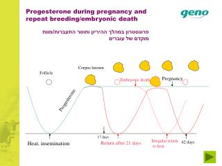 Progesterone during pregnancy and repeat breeding/embryonic death