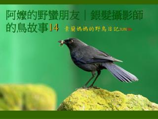阿嬤的野蠻朋友|銀髮攝影師的鳥故事 14 素蘭媽媽的野鳥日記 JUN 06