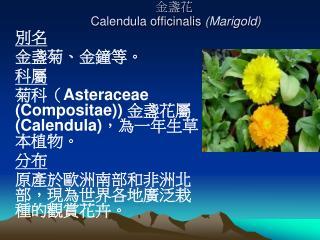 金盞花   Calendula officinalis  (Marigold)