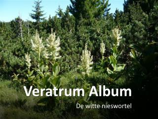 Veratrum  Album