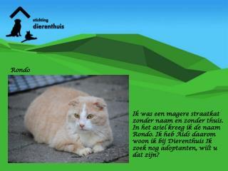 Ik was een magere straatkat zonder naam en zonder thuis.