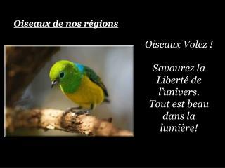 Oiseaux Volez    Savourez la Libert  de l univers. Tout est beau dans la lumi re