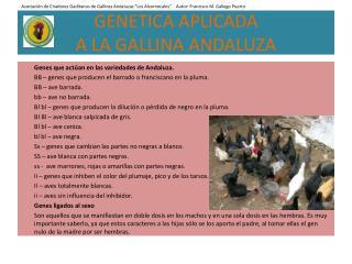 GENETICA APLICADA A LA GALLINA ANDALUZA