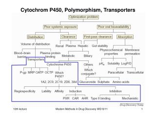 Cytochrom P450, Polymorphism, Transporters