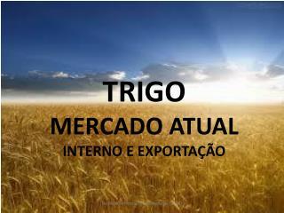 TRIGO MERCADO ATUAL INTERNO E EXPORTAÇÃO