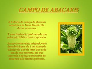 CAMPO DE ABACAXIS