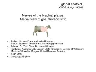 global.anato.cl CODE:  6pAgm100002